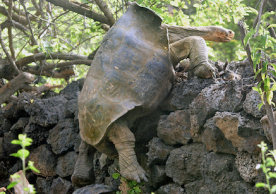 Tortoise trying to escape